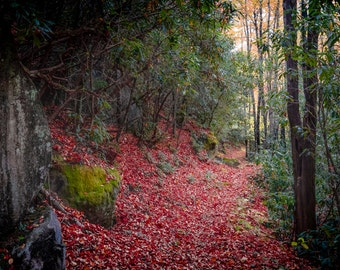 Red Carpet - GSMNP - Great Smoky Mountains National Park - Nature - Hiking - Fine Art - Home Decor - Nature Photography - Tennessee
