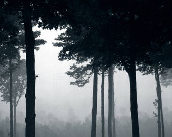Forest Fog - 8x10 digital print, nature photography