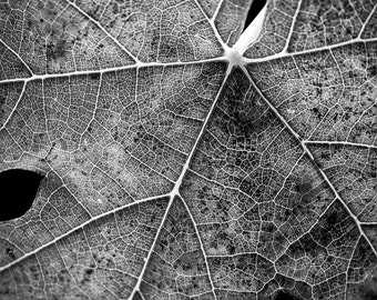 Nature Photography 8 X 10 Print - Home Decor - Fallen Leaf in Black and White