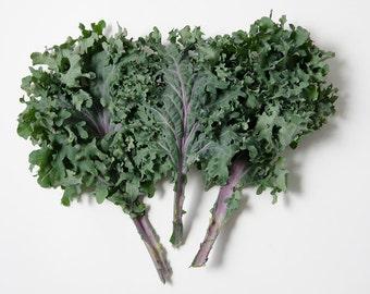 250 *HEIRLOOM* Red Russian Kale Seeds