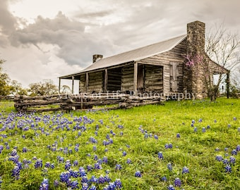 Texas Spring -- Bluebonnets-- Mounted and Matted, Frame-Ready Photograph
