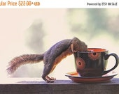 Coffee Art, Squirrel Prints, Kitchen Art, Squirrel Gifts, Coffee Prints, Funny Animals, Nature Photography, Humour, Caffeine Print