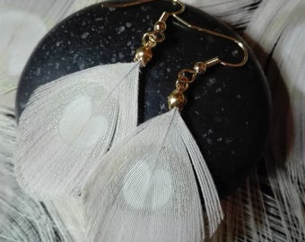 Natural, gold-plated Peacock feather earrings.