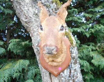 Vintage French Wall Mounted Baby Doe Deer head (P)