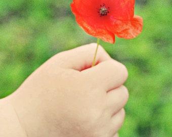Child holding a poppy A4 photography print flower art