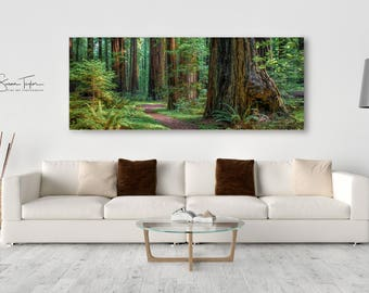 Oversized Panorama Canvas, Redwood Tree Photo, California Redwood Home Decor, Rustic Art, Pacific Northwest Print, Humboldt Forest, Wall Art