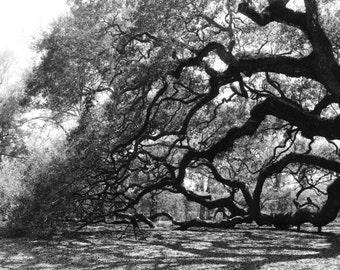 The Angel Oak Reach - Fine Art Photographic Print - Charleston, SC