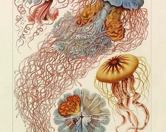 Ernst Haeckel Jellyfish Poster - Vintage Ocean Art Print - Vintage Jellyfish Print - Museum Quality