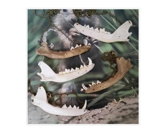 Real fox jaw animal bone bones teeth necklace jewellery on black chain wicca Taxidermy Oddities