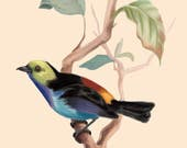 Bird Print Botanical Drawing Art Tree Leaf Nature 5x7