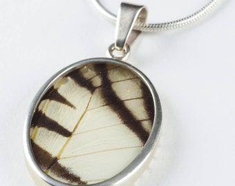 4.25cm Real Butterfly Wing Pendant in Sterling Silver - Jewelry Making Translucent Butterfly Pendant & Butterfly Necklace J782