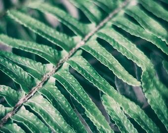 Still life photography,Fern Print, Botanical Print,Nature Photography,Fern Leaf,Fern Wall Art ,Green Photography,Minimal Art