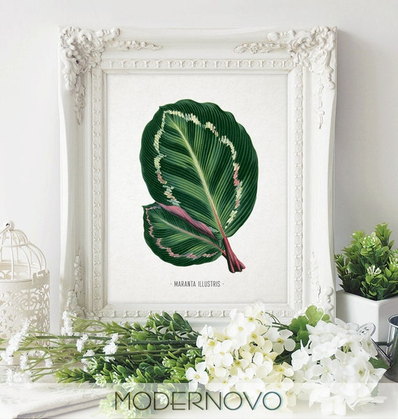 Tropical Leaves Wall Decor : Tropical leaf art leaves wall print botanical