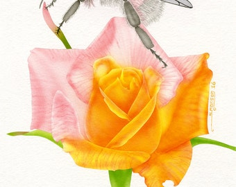 pink bumblebee with rose