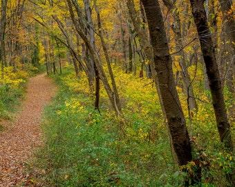 Digital Download: Autumn Path photo