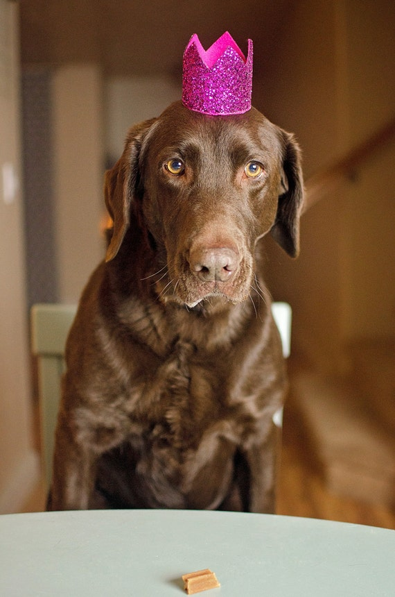 Dog Birthday Crown || Animal Party Hat || Cat Kitty Puppy Pig Birthday Crown Hat || Dog Bandana