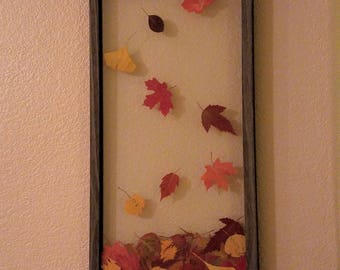 Falling Leaves- Framed pressed leaves