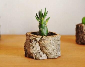 Natural Cork Planter, Handmade Organic and Eco-friendly Cactus and Succulent Planter. Medium Flat Pot.