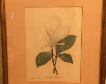 Langlois Botanical Prints