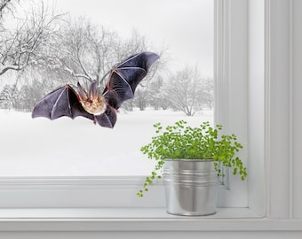 Bat wall decal window decal Halloween decor Wall sticker  Gift for him Realistic wild animal Living room decal Entry door Outdoor decal