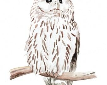 Ural Owl Watercolor, Original Archival Art Print