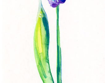 Hyacinth Flower Painting,  Watercolor art, Easter art Minimalist Abstract art by Kathy Morton Stanion EBSQ