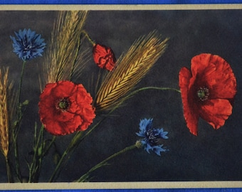 Corn Flower Red Blue Wheat Stalk Art Printed in Switzerland Antique Early 1900s Postcard