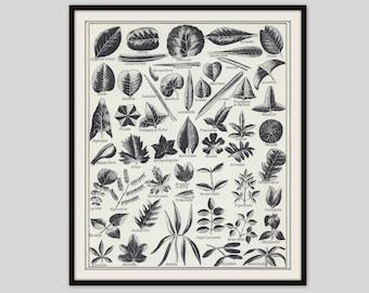 Botanical Wall Art, Leaf Print, Leaves Illustration, Vintage Art Print, Black and White, Leaf Shapes, Nature Print, Natural History Print