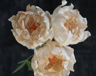 Paper Peony Bundle - Blush Peach Crepe Paper Flowers with Book Paper Accent