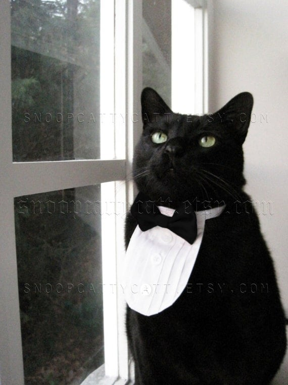 Cat Tuxedo - The Original - Classic Black Tie