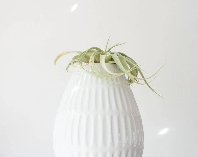 Mid Century Modern Glazed White Porcelain Vase Edelstein West Germany // Bohemian Home Decor