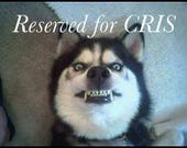 RESERVED FOR CRIS * raven watercolor