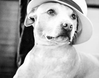"""Dog Art, Animal Photography, Pit Bull Print, Dog with Hat, Dog Decor, Animal Art, Dog Portrait, Dog Gift, Black and White Photography """"Ella"""""""