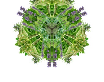 Botanical Mandala - English Herbs I: Giclée print