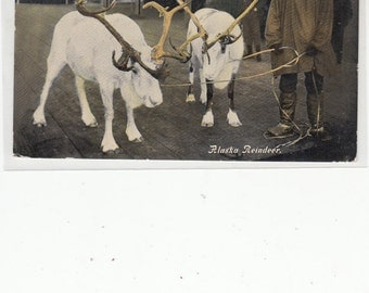 Sepia Tone RPPC Antique Postcards Alaska Reindeer