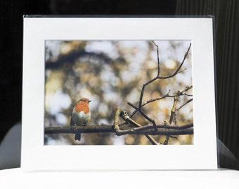 "Mounted Fine Art Photography Print - European Robin (10""x8"")"