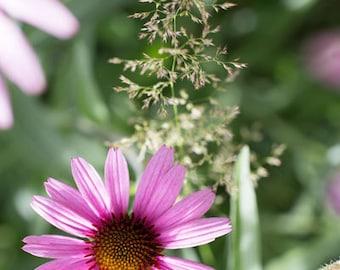 Flower Photography | Fine Art Photography | Photo Print | Flower | Cone Flower | Echinacea | Purple Cone Flower | Fine Art Print