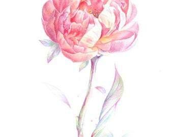 Fine art watercolor painting, flower portrait, pink, orange, peony, WATERCOLOR PRINT, giclee print, flower interest