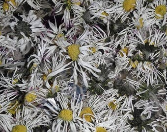 Daisies,Organic,Dried,Magical 10 gram.
