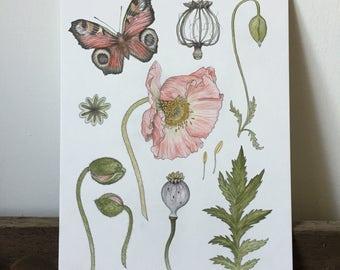 Original watercolour -Poppy Study - botanical art