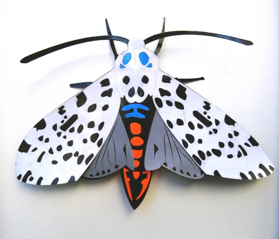 NEW! Giant Leopard Moth |  Large 3D Frame | Faux Taxidermy Butterflies - Entomology | FREE SHIPPING