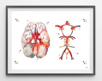 Circle Of Willis watercolor print anatomy art  brain anatomy cerebral arterial circle medical art poster neurology human anatomy wall art