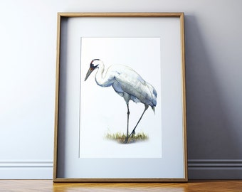 Whooping Crane Watercolor Art Print - Whooping Crane Bird Painting