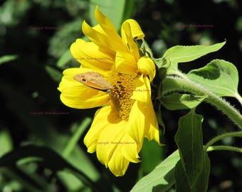 Digital photo, digital art, Sunflower, instant download, for Mom, nature photo, Summer photo, Butterflies, Butterfly in handmade, Garden