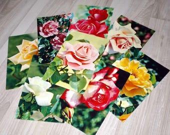 Unused vintage rose postcard set - Rose photography cards - Floral post card set - Vintage flower postcards - Unused flower postcard lot