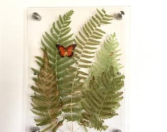Pressed Botanicals. Frame-less Botanical. 3D Frameless Botanical. Acrylic Floating Frame Art