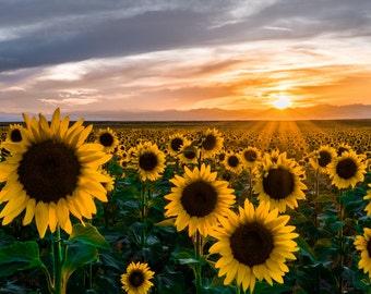 Talavera Tile Sunflower Sunset Switch Plate