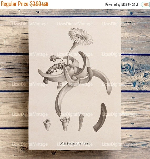 50% OFF Succulent art, Succulent printable, Plant art, Botanical, Vintage botanical print, Succulent print, Antique wall art, A3 8x10 11x14