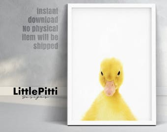 Duck print, children bedroom art, duckling print, duck photography, peekaboo animal, baby animal poster, baby duck photo, baby duckling art