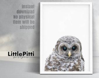 Owl print, woodlands nursery birds, baby owl photo, nursery wall art, printable poster, woodland animals, little owl print, cute owl nursery